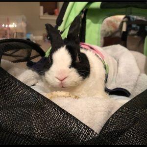 Bonks Bunny